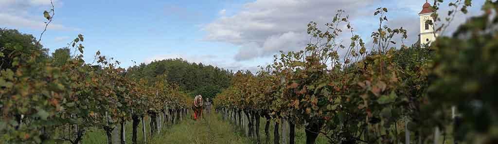 hoch vineyard