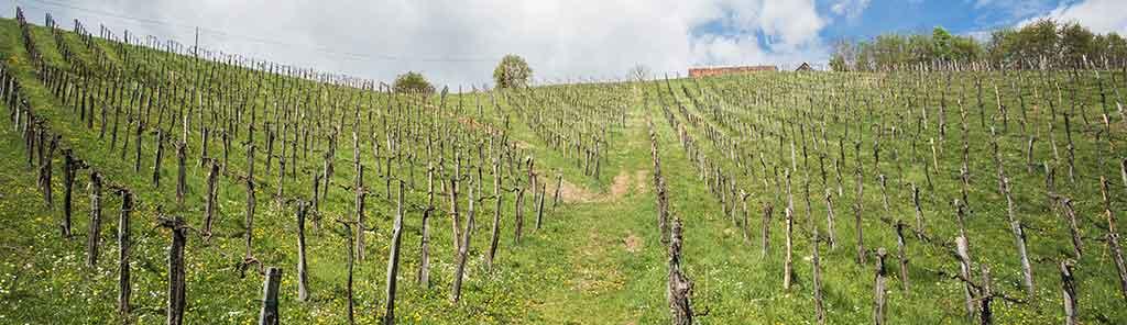 muster vineyard