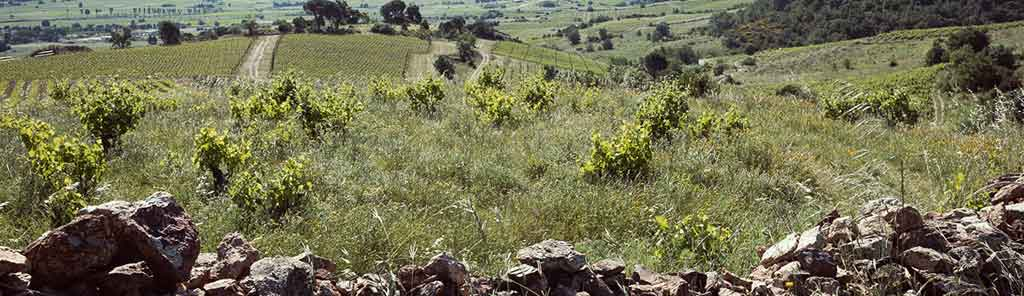 domaine des mathouans vineyard