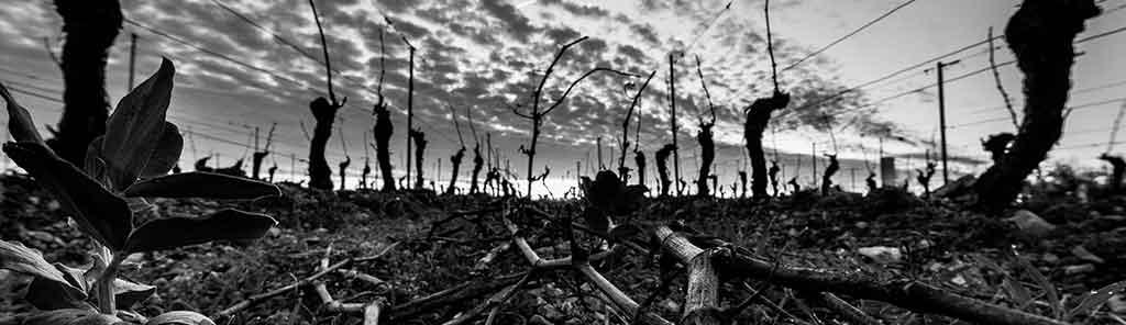 fabien-vineyard-panorama
