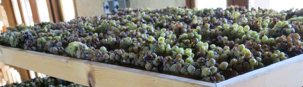 paolo-bea-dried-grapes-panorama