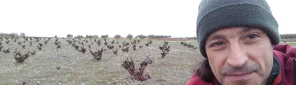 vinos ambiz vineyard
