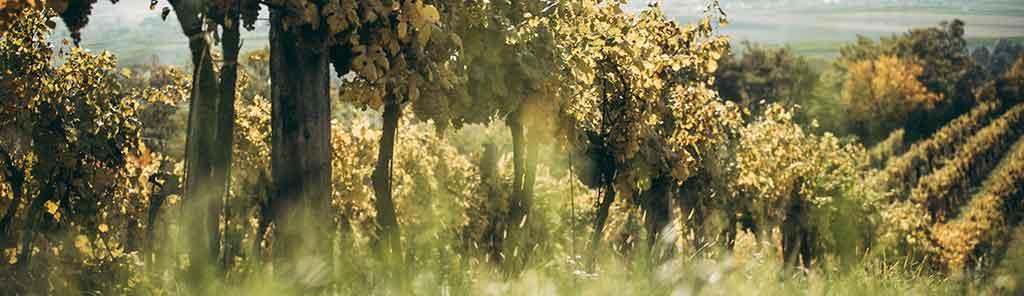 trapl vineyard