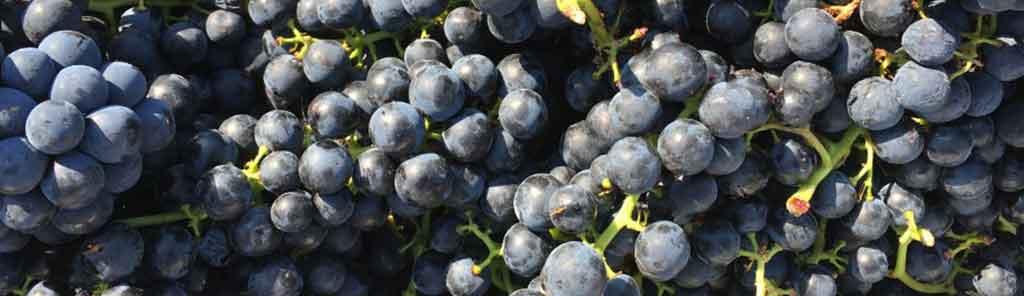 2naturkinder grapes