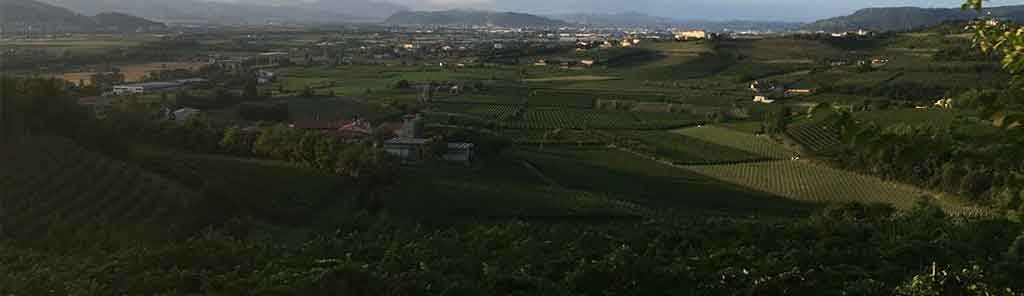 yeasteria vineyard in tenuta armonia