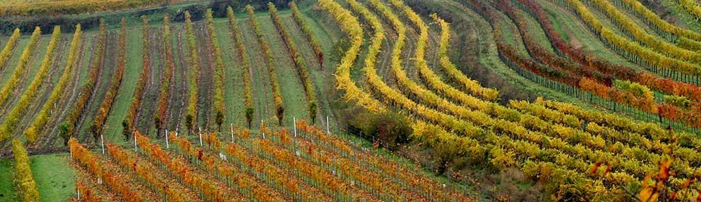 Fidesser vineyard panorama