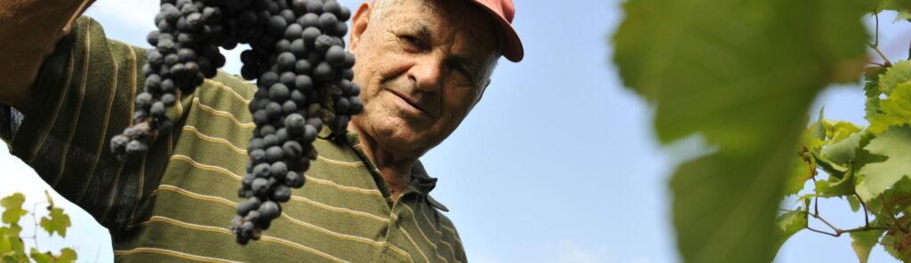 Poderi Cellario holding grapes